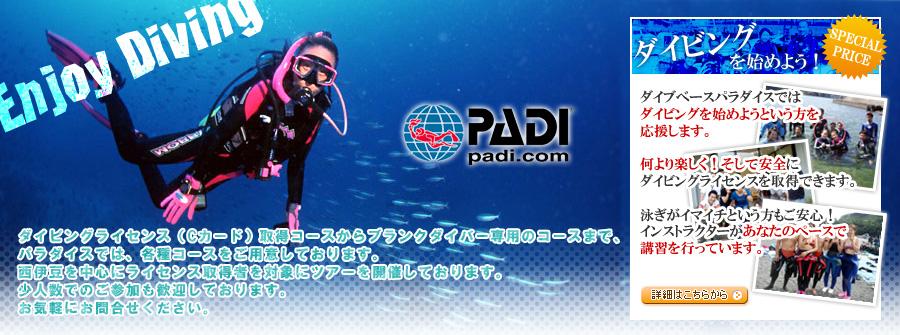 静岡 ダイビング|ダイブベースパラダイス